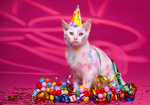 Cats With Party Hats