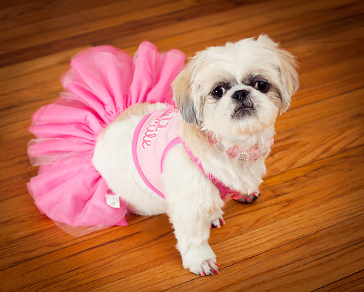 Ballet animal stock photos kimballstock for Hardwood floors dog nails