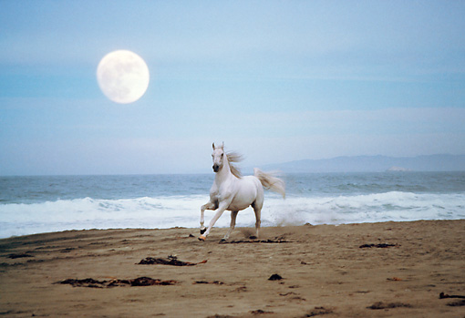 """white horse beach women 826 comments on """" a huge list of horse  death she finds a wandering horse on the beach but i think its her mother who  a boy and a white horse and."""